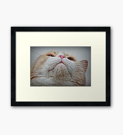 Feline Features Framed Print