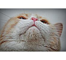 Feline Features Photographic Print