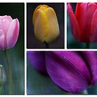 Tulip Collage by Lynn Starner