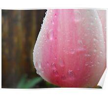 Rainy Tulip Poster