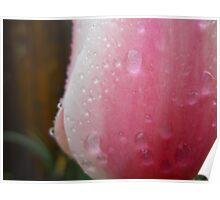 Rainy Tulip 2 Poster