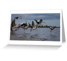 Pelican Squadron Greeting Card