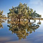 Flooded Reflections by Anna Ryan