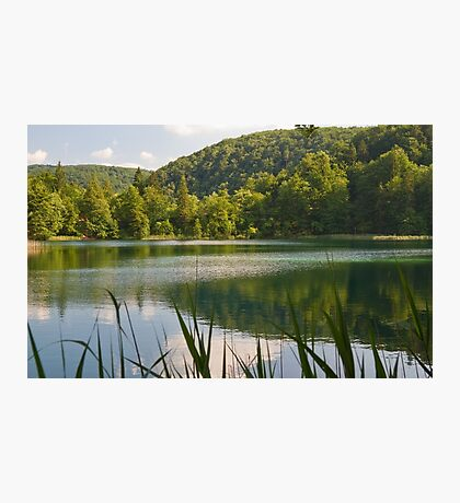 Lake in the forest. Photographic Print