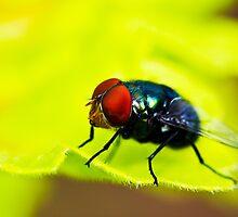 When did I start liking flies? by Chris Brunton