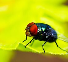 When did I start liking flies? by Chris Brunton