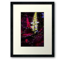 Summer glow ! Framed Print