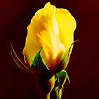 Yellow on Red by Matt Hill
