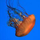 Jellies Invasion by Lori Deiter