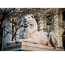 Lion-New York Public Library Photographic Print