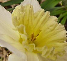 Spring Arose by Pamela Phelps