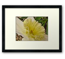 Spring Arose Framed Print