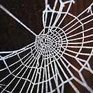 Frosty Web by PinkK