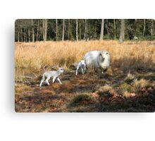 Proud Mom with her Little Lamb Canvas Print