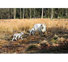 Proud Mom with her Little Lamb Photographic Print