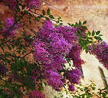 Tuscany Lilacs  by Elaine  Manley