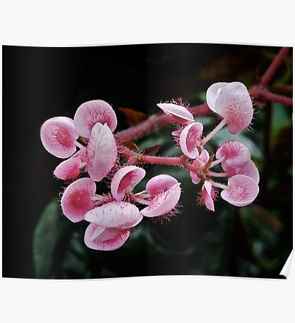Pink Jellyfish Plant – A Fairytale Poster