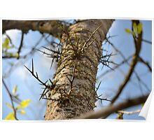 Dangerous Honey Locust Tree Poster