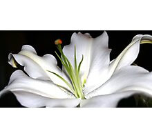 Lily in White Photographic Print