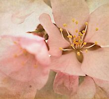 Spring Blossoms by Shelly Harris
