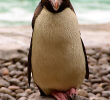 Penguin at the London Zoo by Bringyourownsun
