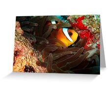 Clownfish in Hiding Greeting Card
