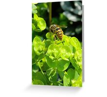Spring Wasp Greeting Card
