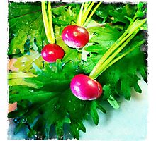 Radishes Photographic Print