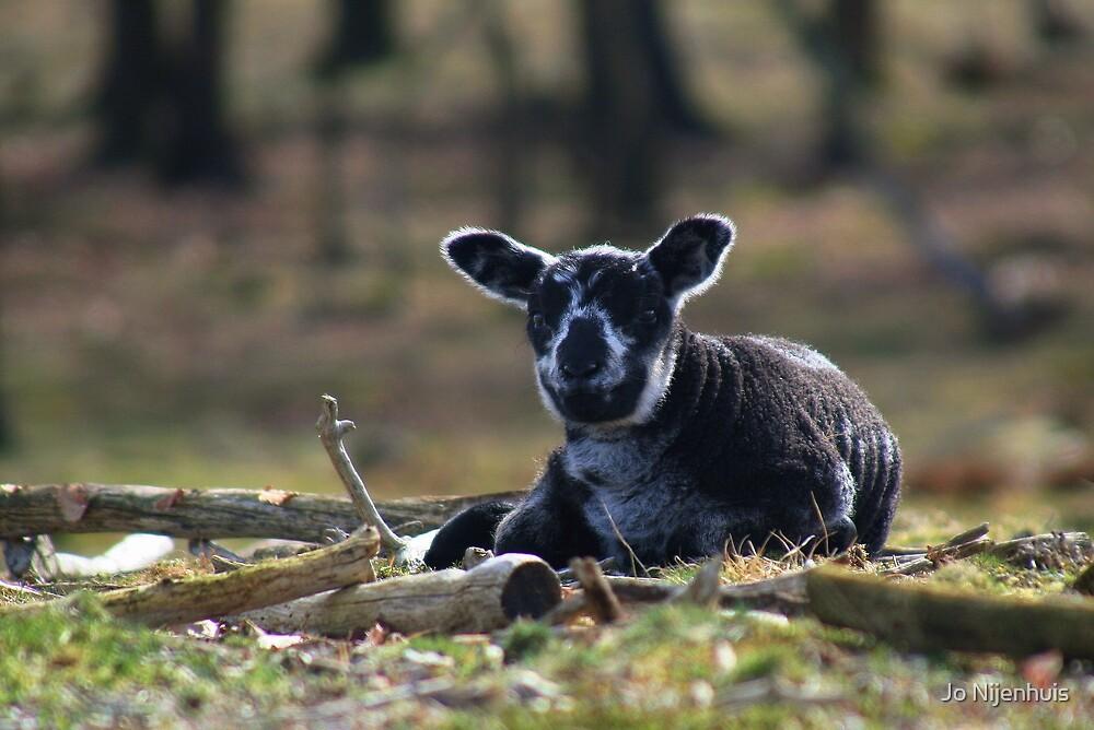 Little Black Sheep by Jo Nijenhuis