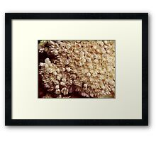 Xenia Coral Pulsing Framed Print