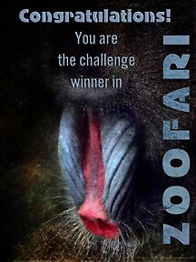 ZOOFARI BANNER CHALLENGE by vigor