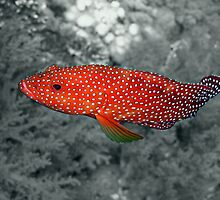 Coral Trout Selective Colour by SerenaB