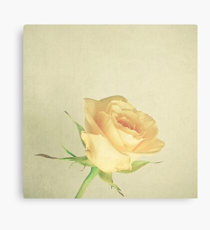 A Single Rose Canvas Print