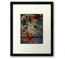 Domino Damselfish in Anemone Framed Print