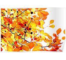 Orange yellow autumn leaves Poster