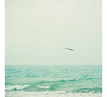 Lone Bird Photographic Print