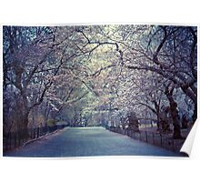 Spring Cherry Blossoms - Central Park - New York City Poster
