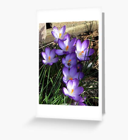 Easter Crocuses Greeting Card