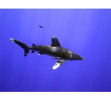 Oceanic Whitetip and Pilot Fish Photographic Print