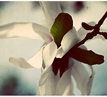 embrace by Tania Palermo