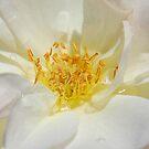 Fresh Pollen by saseoche