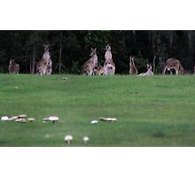 A MOB OF MUSH-ROOS Photographic Print
