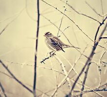 Sweet little bird  by Sylvia Coomes