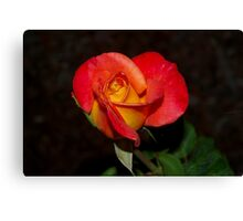 Two toned delight Canvas Print