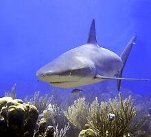 Shark Swimming Into Shot by SerenaB