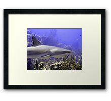 Shark Swimming Past Framed Print