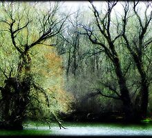 Emerald Woods © by Dawn M. Becker