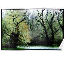 Emerald Woods © Poster