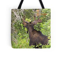 Bull Moose Eating From The Trees  Tote Bag