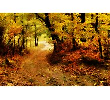 Maple Forest Path Photographic Print